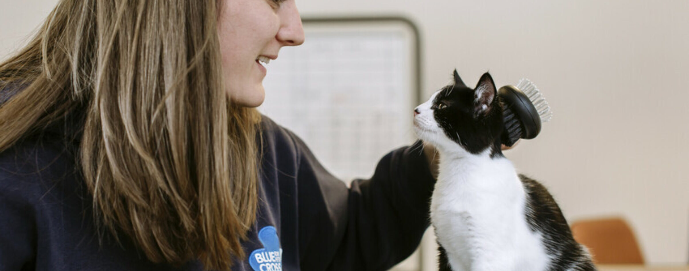 Black and white cat being stroke by a woman