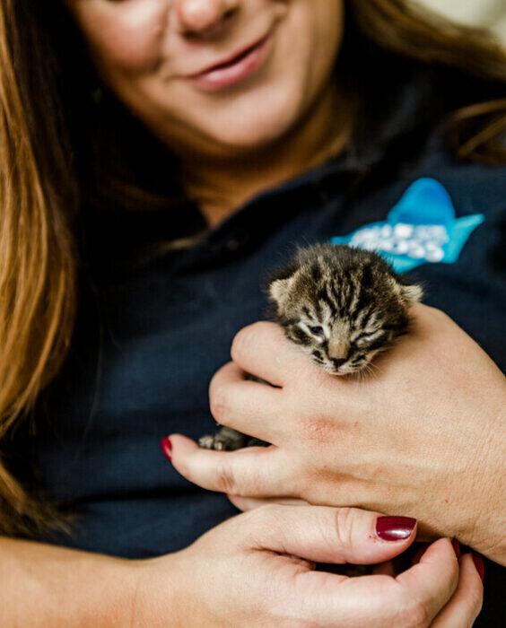 BX150417 Kittens 2020 09 21 0027 scr