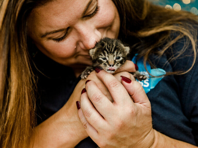 BX150435 Kittens 2020 09 21 0054 scr